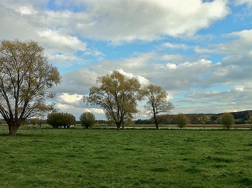 Flanders Landscape